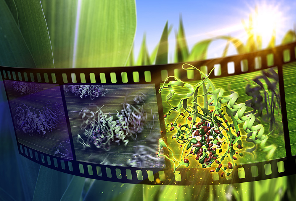 Colorful flower-like phytochromes seem to be brought to life, through a sunlit film reel.