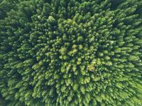 a forest seen from above