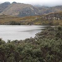 Polylepis forest in Cajas National Park