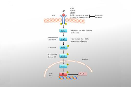 Figure 1 - research in genetics of melanoma