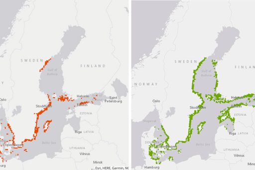 Maps of the present and future distribution of bladderwrack in the Baltic Sea.