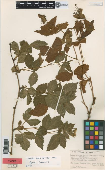 Type specimen from Herbarium GB